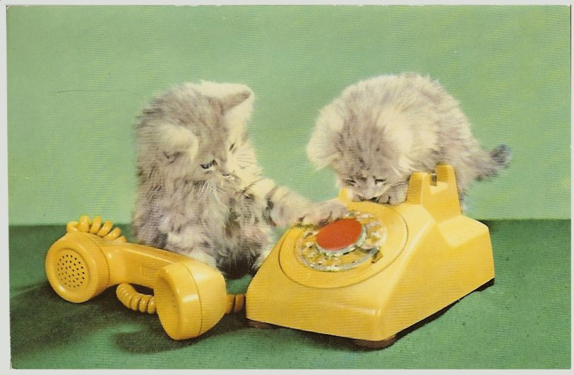 Cats on old-fashioned yellow phone