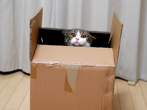 And if anyone wants to make fun of you for being in a box...