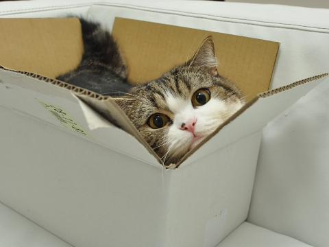 Maru the Cat loves boxes
