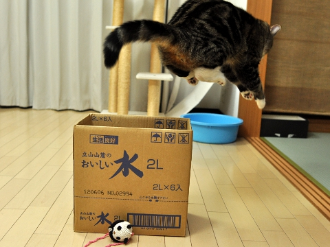 If you don't like a box, you can always just jump out of it!