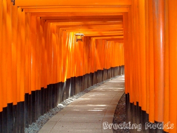 orange torii in kyoto wm