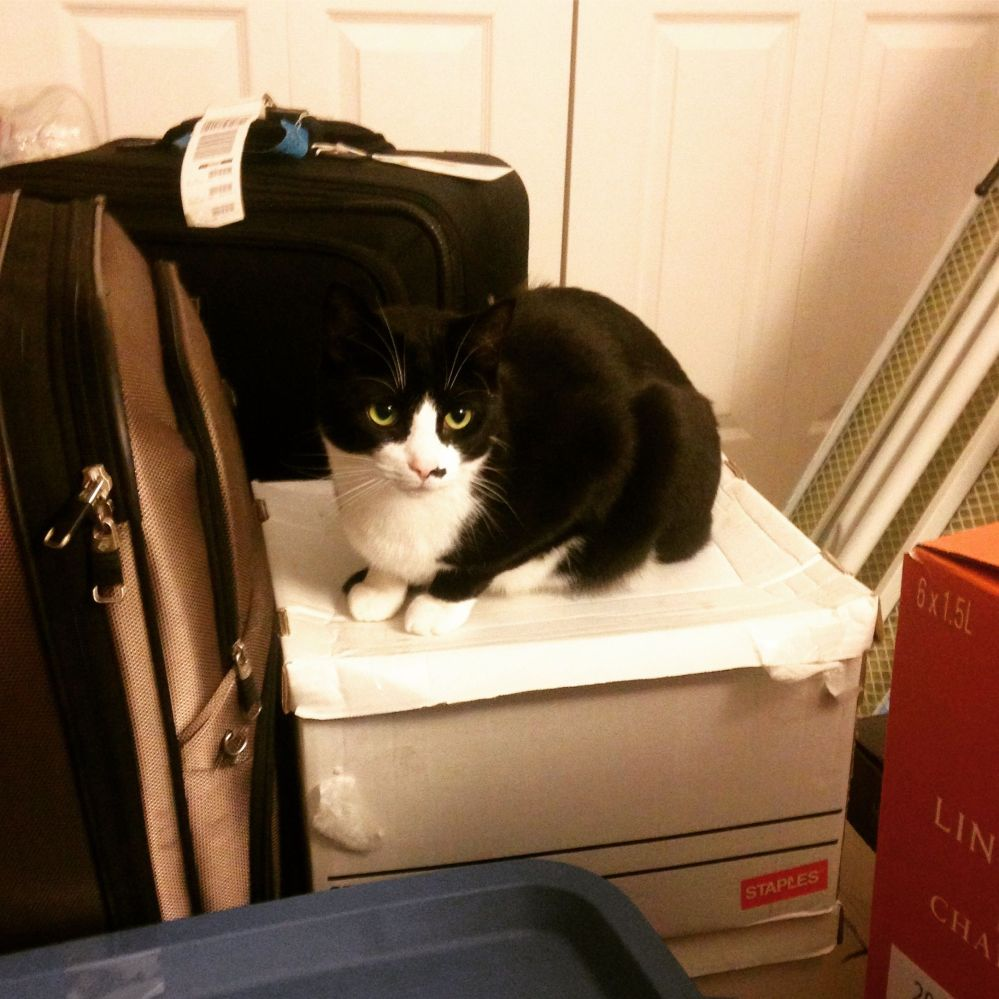 packing-with-yama