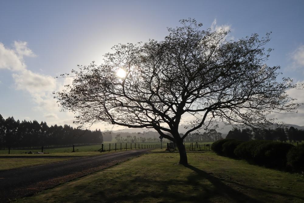monastery tree sun