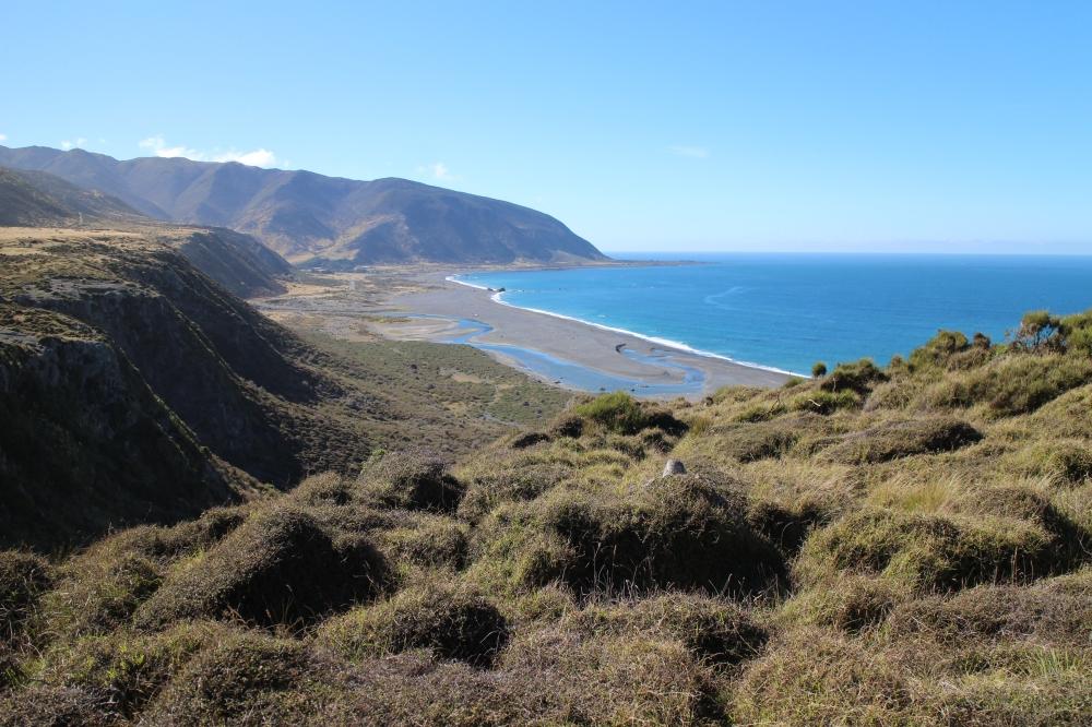 NZ biking views