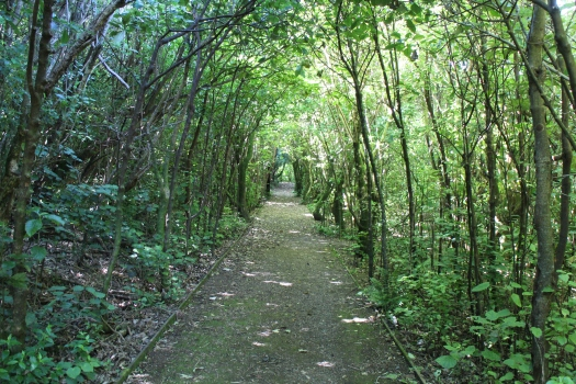 Trip One: The path feels like a long way to go