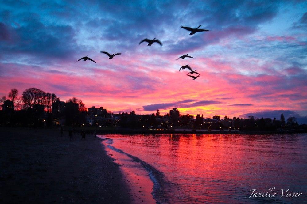 Kits NYD sunset birds wm